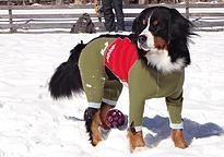 雪の日に愛犬用ウェットスーツ